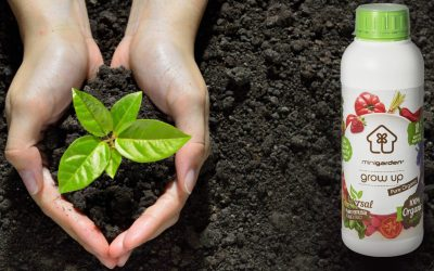 The importance of using organic fertilisers for plant nutrition in contemporary agriculture and gardening